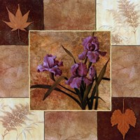 Lavender Iris Fine Art Print