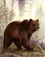 Grizzly Mama Fine Art Print
