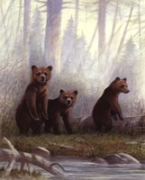 Grizzly Cubs Fine Art Print