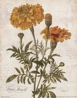 October Marigold Fine Art Print