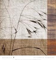Botanica 7 Framed Print