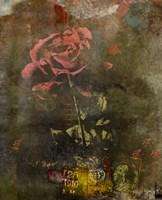 Classic Rose I Fine Art Print