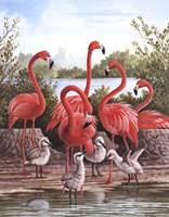 Flamingo 1 Framed Print
