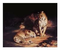 Pair Of Leopards Fine Art Print