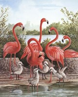 Flamingo 1 Fine Art Print