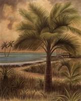 Island Palm II Framed Print