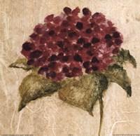 Maroon Flower Fine Art Print