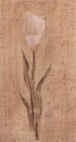 White Cala Lily Fine Art Print