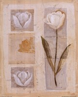 White Tulip Montage Fine Art Print