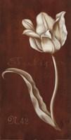 White Tulipa N 42 Fine Art Print