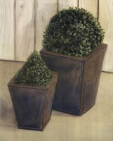 Plants In Pots Fine Art Print
