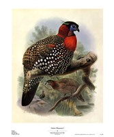 Native Pheasant I Fine Art Print