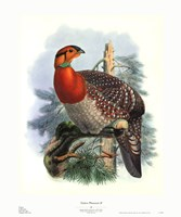 Native Pheasant II Framed Print
