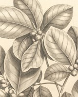 Tropical Connection I Fine Art Print