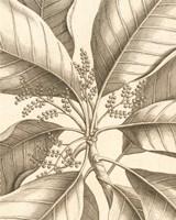 Tropical Connection II Fine Art Print
