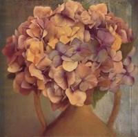 Lavender Hydrangea Framed Print