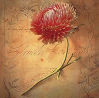 Little Strawflower Fine Art Print