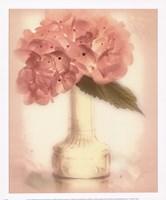 Lovely Hydrangea Framed Print
