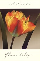 Flame Tulip II Fine Art Print
