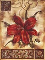 Illuminated Lily II Framed Print