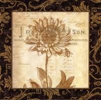 Anemone Fine Art Print