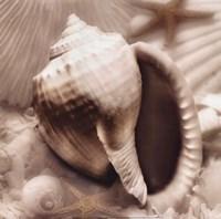 Iridescent Seashell III Fine Art Print