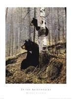 In The Adirondacks Fine Art Print