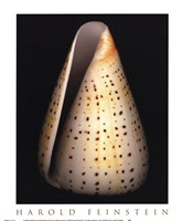 Lesser Butterfly Cone Fine Art Print