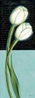 White Tulip Fine Art Print