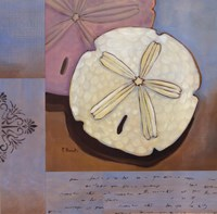Sanibel Sand Dollar Fine Art Print