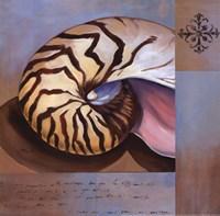 Sanibel Nautilus Fine Art Print