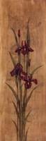 Iris Of Delos I Framed Print