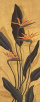 Bird Of Paradise - Mini Fine Art Print