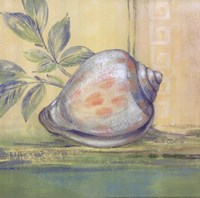 Tranquil Seashells I Framed Print