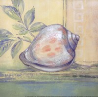 Tranquil Seashells I - Mini Fine Art Print