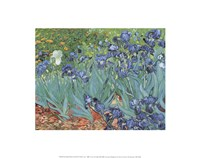 Irises in the Garden, Saint-Remy, c.1889 Framed Print