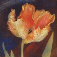Dusk Tulip I Framed Print
