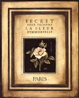 Les Fleurs De Paris I - Mini Fine Art Print