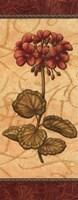 Red Passion Geranium - Petite Fine Art Print