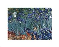 Irises in the Garden, Saint-Remy, c.1889 Framed Print