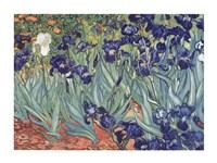 Irises, Saint-Remy, c.1889 Fine Art Print