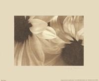 Daisies I Framed Print