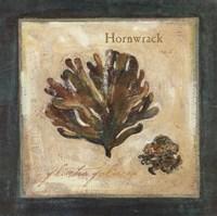 Hornwrack Fine Art Print