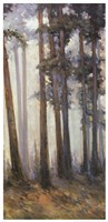 Silver Trees II Fine Art Print