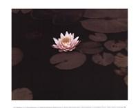 Meandering Lily II Fine Art Print