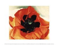 Poppy, 1927 Fine Art Print