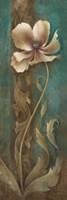 Gracieux II Fine Art Print