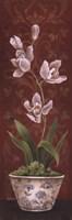 Organic Orchids I Framed Print