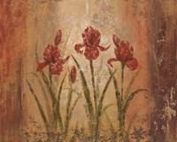 The Iris Style Fine Art Print