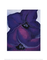 Purple Petunias, 1925 Framed Print